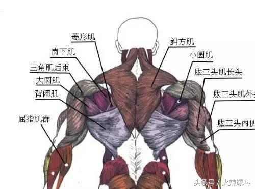 背部锻炼动作大全
